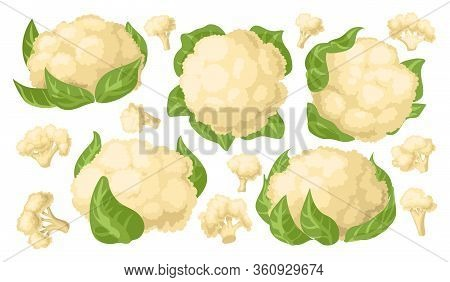 Cauliflower Vector Cartoon Set Icon. Vector Illustration Cabbage On White Background. Isolated Carto