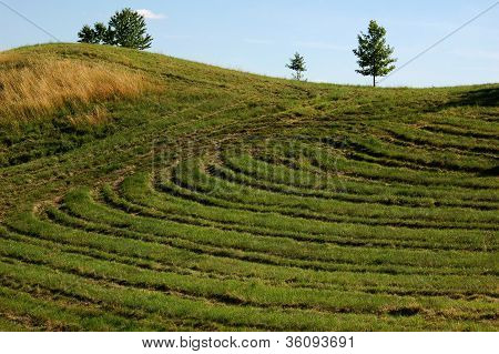 Meadow behind the village