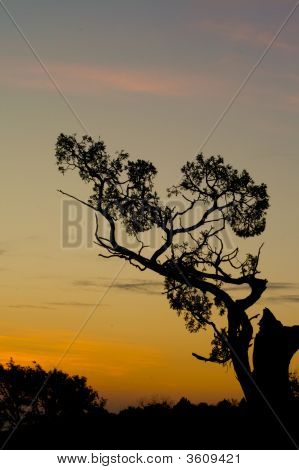 Gnarly Silhouette