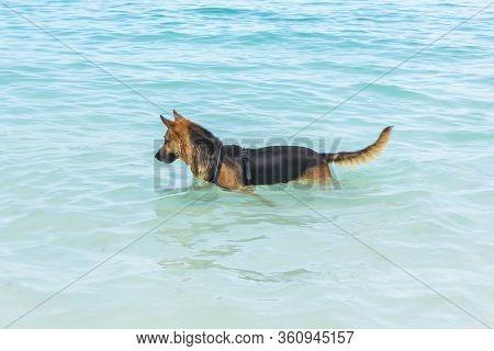 The Dog On The Sea In Tanzania