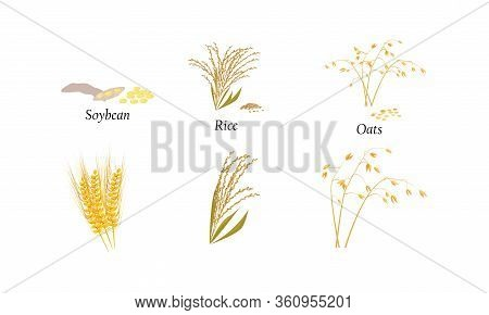 Hand Drawn Different Types Of Cultivated Cereals With Titles