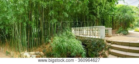 Bamboo Thicket And Stone Decorative Footbridge With Railing And Balusters In Park, Panoramic View