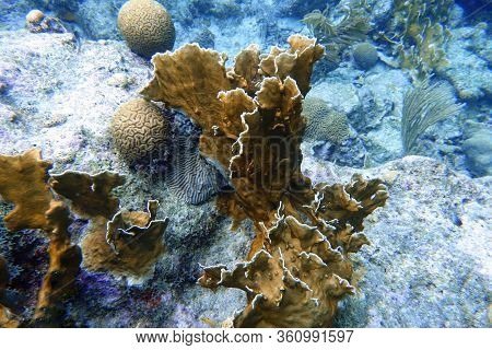 An Underwater Photo Of Coral. Corals Are Marine Invertebrates Within The Class Anthozoa Of The Phylu