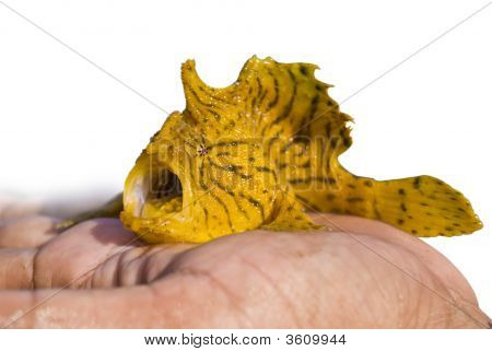 Isolated yellow sea fish on flat of the hand poster