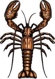 A Drawing Of A Lobster
