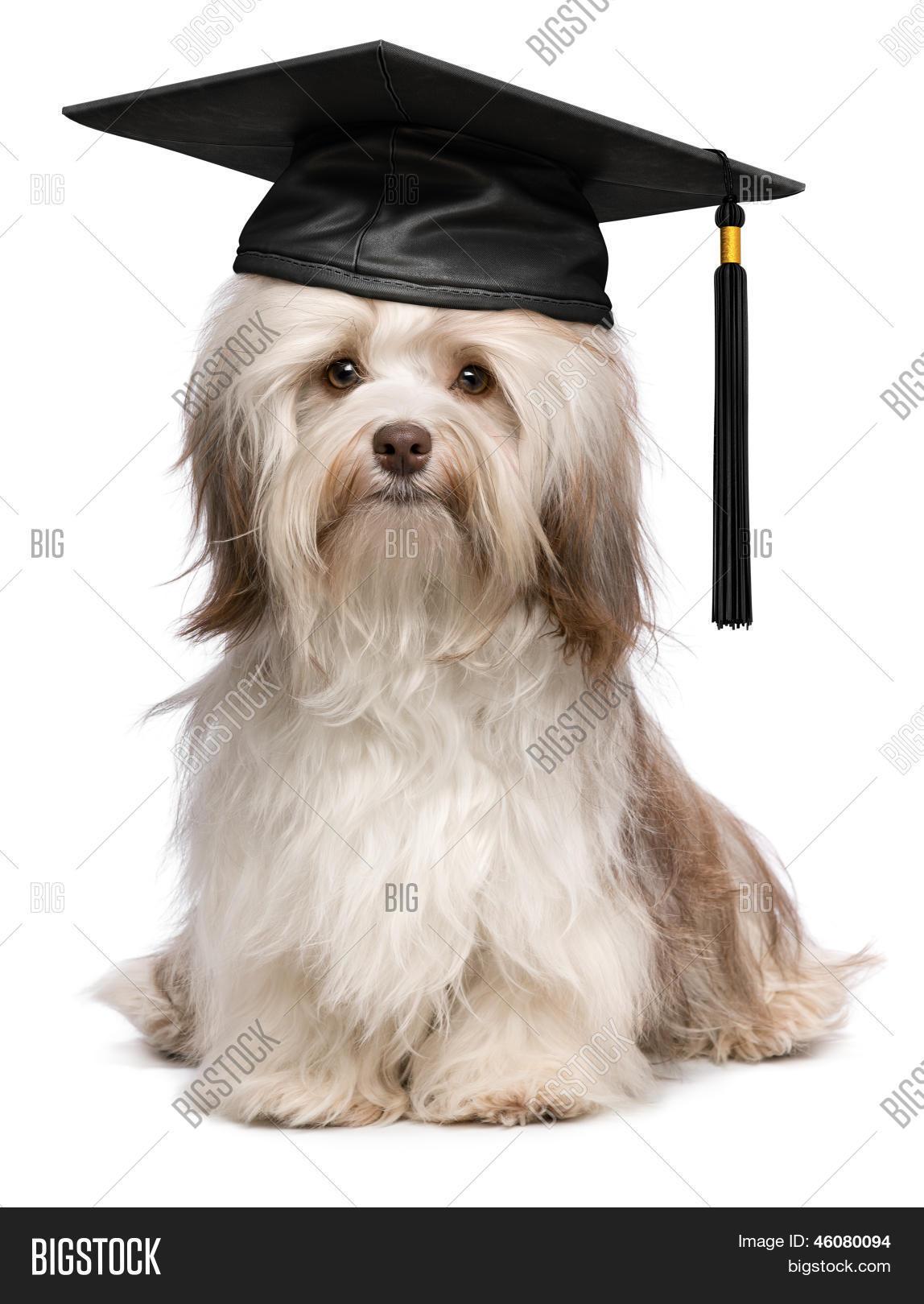 Wonderful Graduation Cap Black Adorable Dog - 46080094  Pic_2510046  .jpg