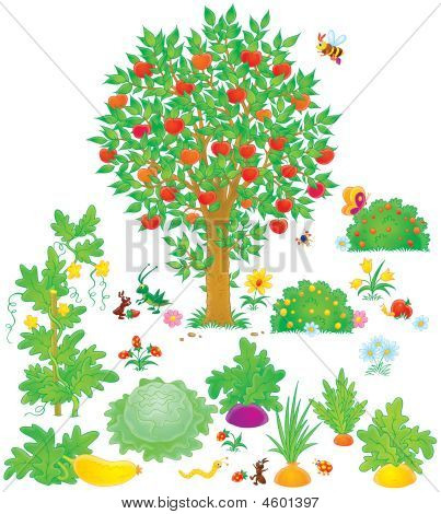 Orchard And Vegetable Garden