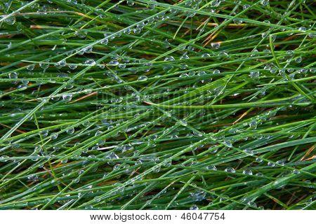 wet grass blades 4