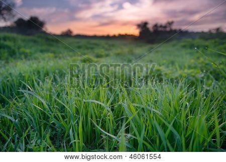 Sonnenuntergang über der grünen Wiese