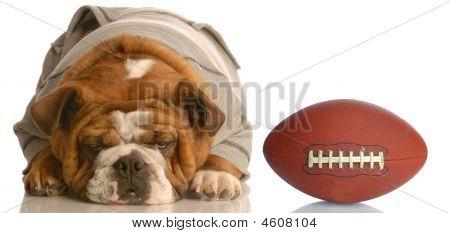 Bulldog Wearing Sweatsuit With Football