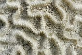 Abstract background - the brain coral close-up poster