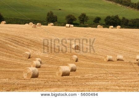 harvesting in ireland