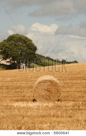 success in farming