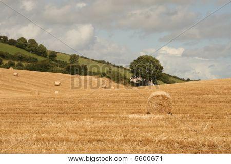 irish summer scenery