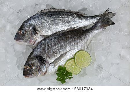 Fresh Fish Giltheads On Ice