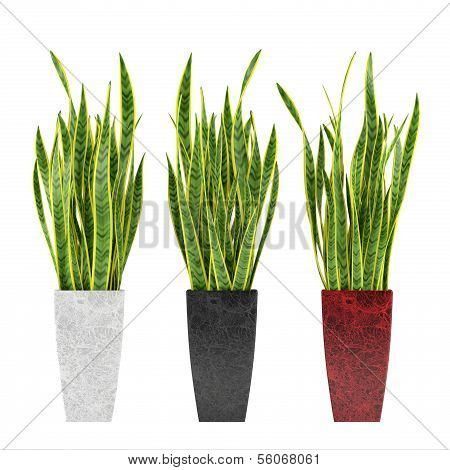 Decorative grass plant in flowerpot.