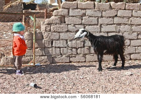 Little child and curious goat looking at each other