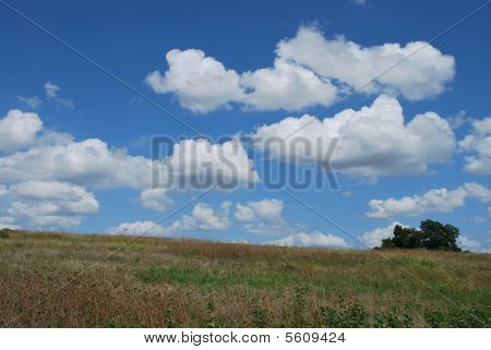 An area at White Rock Lake below Winfrey Point, is a hillside of natural prairie grasses and wildflowers. poster