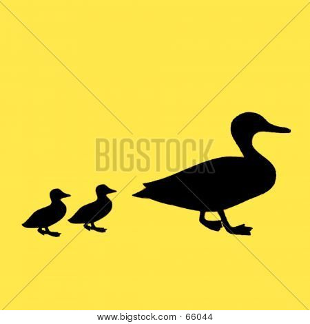 mother and two baby ducks ** Note:  best at smaller sizes poster