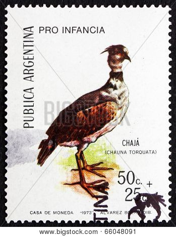 Postage Stamp Argentina 1973 Southern Screamer (chaja), Bird
