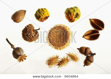 fruits and seeds of the fall