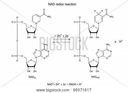 Illustration Of NAD Redox Reaction