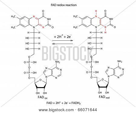 Illustration Of FAD Redox Reaction With Chemical Formulas