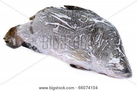 Frozen Barramundi Or Koral Fish Of Southeast Asia