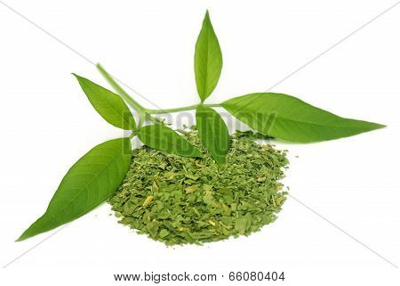 Vitex Negundo Or Medicinal Nishinda Leaves