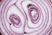 Background of Red Onion Slice Cross Section closeup poster