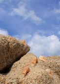 A snail leading group of sea snails crawling over top of solid rock towards blue sky poster