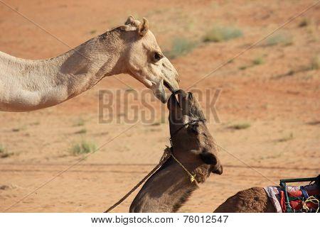A Kiss In The Desert