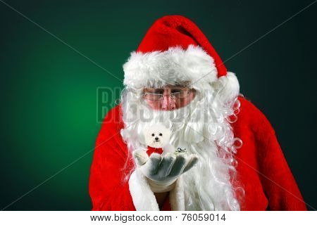 Santa Claus holds a tiny little purebred Bichon Frise dog in the palm of his hand while using his Christmas Magic to make it ready to deliver it to some good little boy or girl for Christmas.