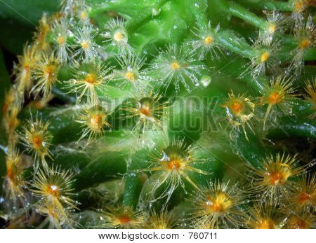 Cactus With Water