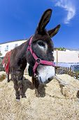 Summer farmland landscape and a Donkey portrait poster