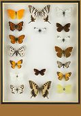 Cristal box with preserved colored butterflies. Vertical format poster
