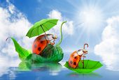 Rainy day in nature. Little ladybugs with umbrella floating on spring flood. poster