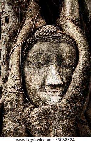 Head Of Buddha Under A Fig Tree, Ayutthaya
