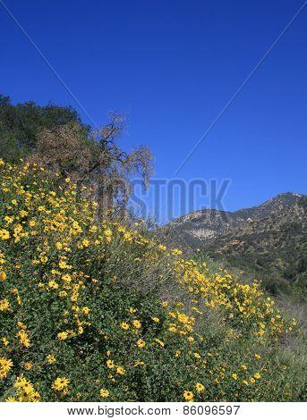 Eaton Canyon flowers