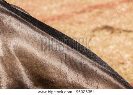 Horse Hair Neck