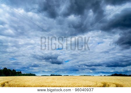 Golden Field Of Wheat And Stormy Clouds.
