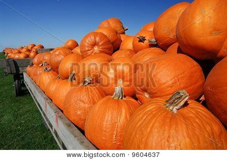Pumpkin Carts