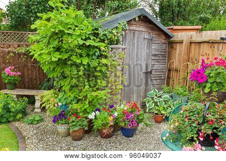 Old wooden shed surrounded by plants