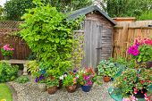 Garden shed surrounded by colorful potted plants and shrubs. poster