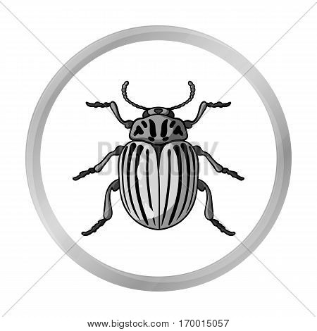 Colorado beetle icon in monochrome design isolated on white background. Insects symbol stock vector illustration.