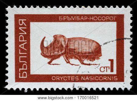 ZAGREB, CROATIA - JUNE 25: A stamp printed in Bulgaria shows European rhinoceros beetle (Oryctes nasicornis), series beetle, circa 1968, on June 25,2014, Zagreb, Croatia