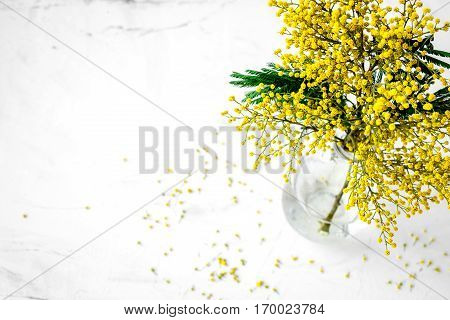 mimosa in glass vase on white background top view.