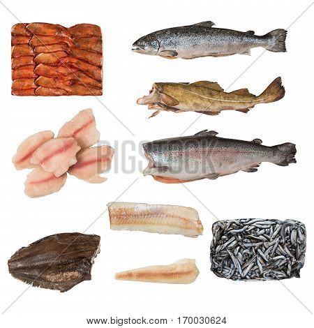 Set Of A Different Frozen Fish