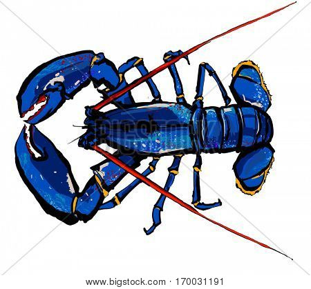 Lobster isolated on a white background - vector illustration