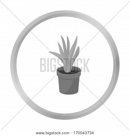 Office plant in th flowerpot icon in monochrome style isolated on white background. Office furniture and interior symbol vector illustration.
